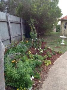 Back garden new