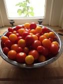Mixed mini tomatoes