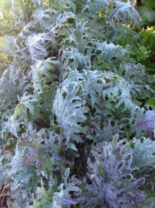 Icy Kale just starting to defrost