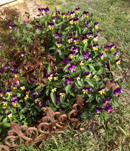 Heartsease working hard to brighten up their corner
