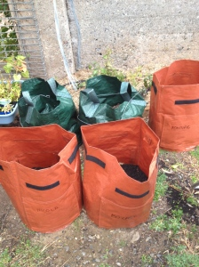 My 'tatie bags labelled and planted. There are a few more still to be set up.