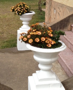 These Gazanias suite the old urns - and need to be able to take plenty of heat.
