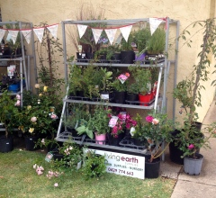 Living Earth's plant stall provided interest and temptation for visitors