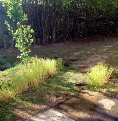 The Chamomile - which I had thought was lawn chamomile - made an amusing and quirky path border