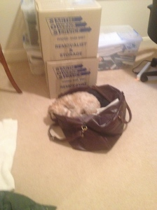 Tango has already packed herself