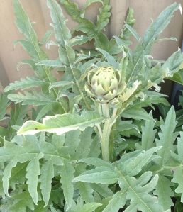 What does one do with a single artichoke?