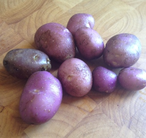 Possibly the original potatoes I planted!