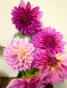 Dahlias - a box of bulbs was anonymously left at my bad gate