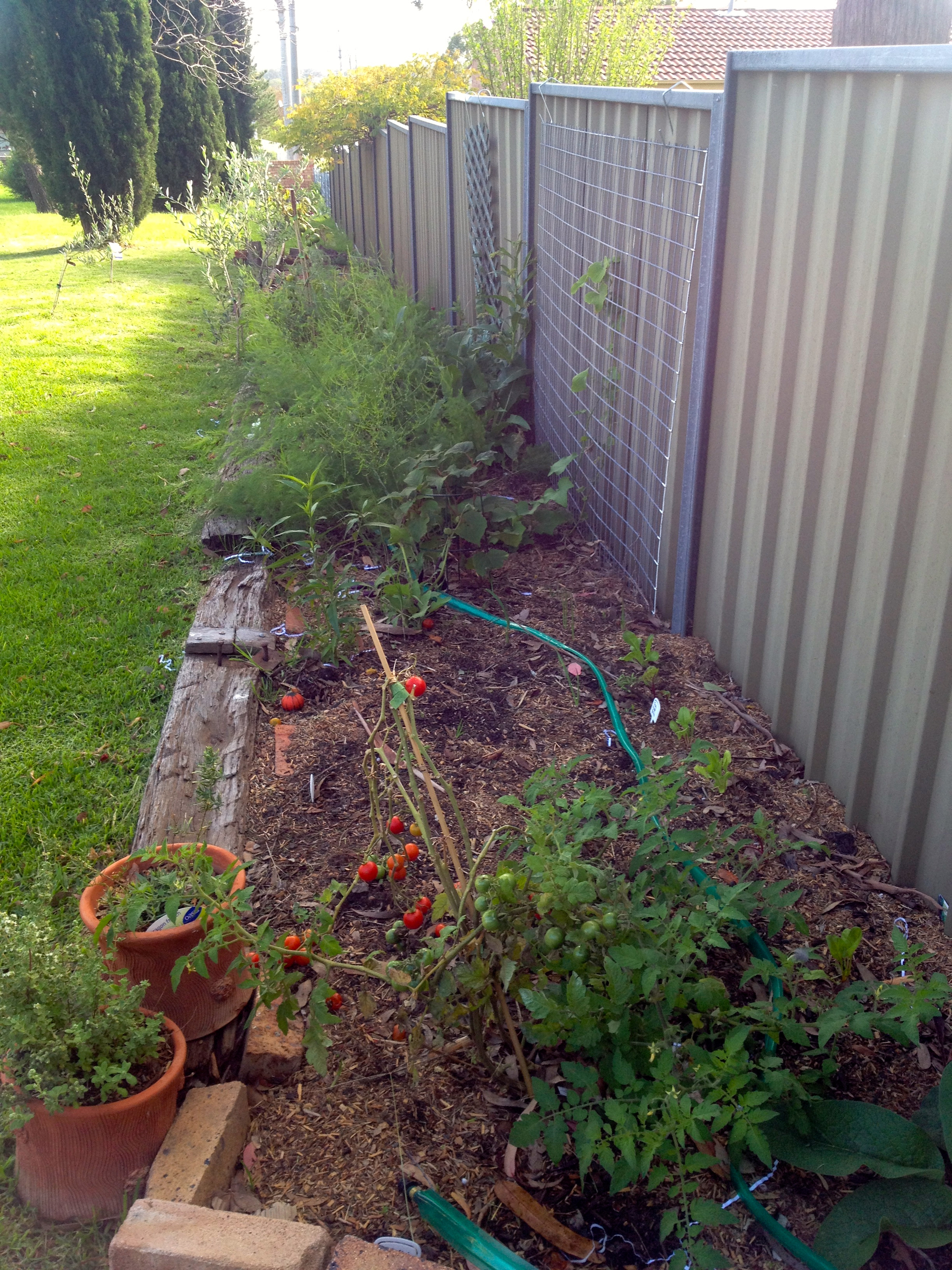 Raised Garden Bed Against Colorbond Fence Home Designs Inspiration