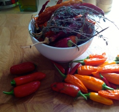 A healthy mix of chillies.