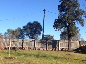 The Kurrajong now stands out and waits for a new garden bed.