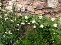 A Blushing Pierre de Ronsard along the Grotto.