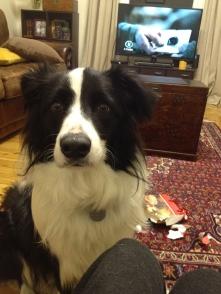 Popcorn - such a beautiful boy.