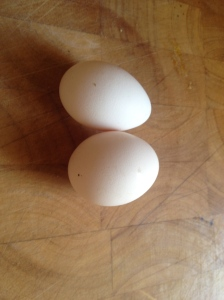 Two perfect little bantam eggs.